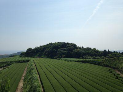 Prof. Masashi Omori: Gaba Tea and the Innovations of Japanese Tea
