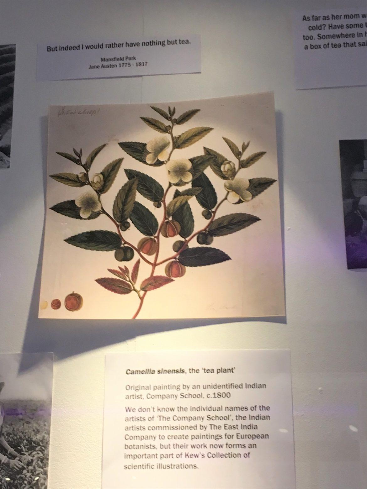 The_Botanical_Kew_Gardens_Interior_London_TeaVoyages