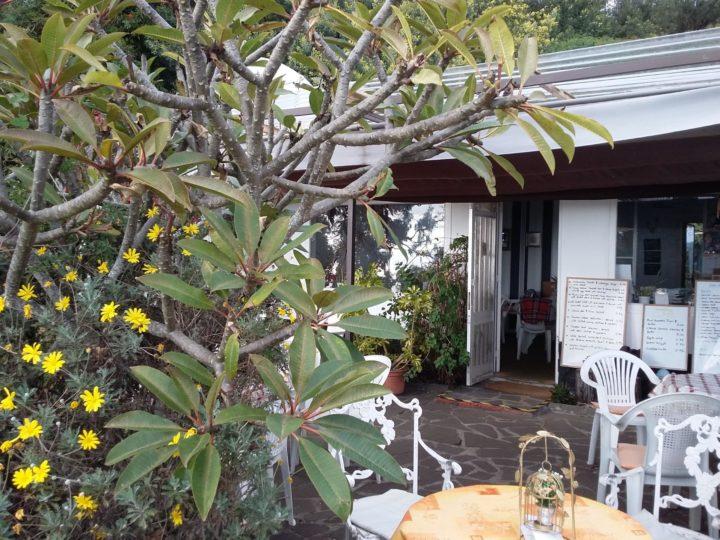 Madère, Funchal | Maison de thé Jasmin Tea House